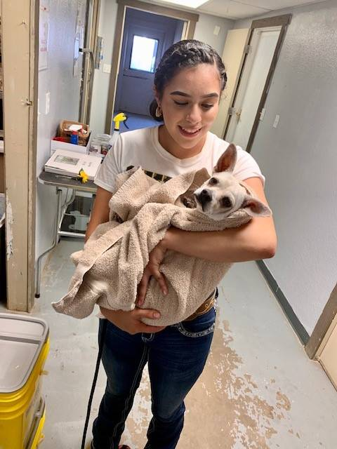 Cheer Valley Humane Society 20191026 (4)