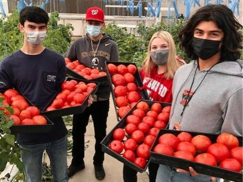 CG-AgriscienceTomatoesForSale20210324 (1)Crop