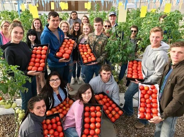CG-AgriscienceTomatoes20210414 (1)Crop